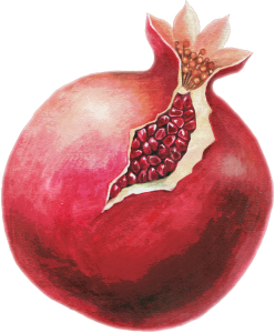 PD-139/1 Pomegranate (Kiddy)