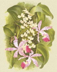 C-207 Orchids (Nature)